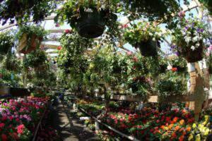 Prickly Pear Garden Centre